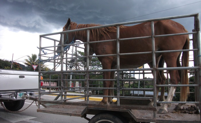 A Horse in the Road, Honduras